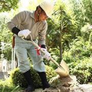 京都の植木屋ブログ〜庭木1本からリフォームまで