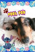 mini-&pooh&pon