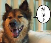 世界で100番目に幸せな犬