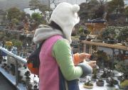 あー猫さんの盆栽と山と徒然日記