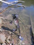 釣り行くか考え中