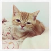 レオさんと一緒☆猫ブログ