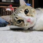 何でも再発見! 猫と生活