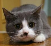 猫ごはん日記