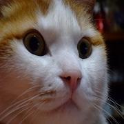 ふわり猫 にゃにー