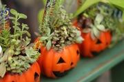 富山の観葉植物レンタル屋・気ままブログ♪