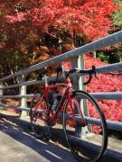 acchanのロードバイク日記