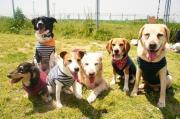 六匹六色〜愛犬6匹との毎日〜