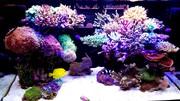 goofyの珊瑚と海水魚
