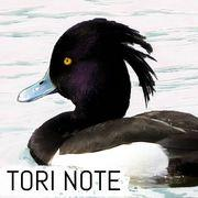 Tori Note -茨城の野鳥観察日誌-