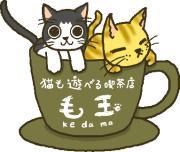 猫喫茶 毛玉