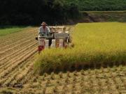 リーマン農夫の『新農業実践論』。時々、津軽三味線。