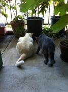 小さな畑と猫のしっぽ 菜園編