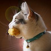 はてにゃん!猫の豆知識