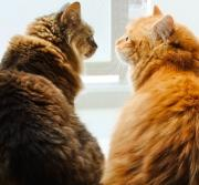 雨の散歩をしないかね2 〜ネコとの甘い生活〜