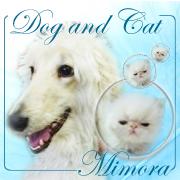 DOGandCAT  Mimoraのひとりごと