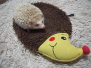 ハリネズミ?はりねずみ?Hedgehog?