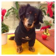湯の町別府でのガーデニング&元気なシニア犬U・x・U
