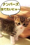 にゃんちゅ〜☆てきちゅ〜☆