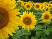 色々使える時間貸しルーム「咲いた咲いた♪津田沼」教室、趣味の集い、会合、ビジネス等に!