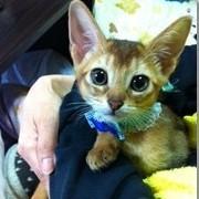 猫のジェイ君と菊ノ助にスマイル^^