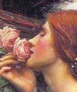 バラ大好き東南向きベランダの記録
