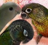 小鳥の宝石箱