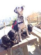 ゼーゼマンの孫犬☆レイディ&ゲイツ