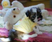 わんこママのDIY Dog Life