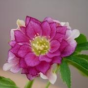 癒しの花空間♪