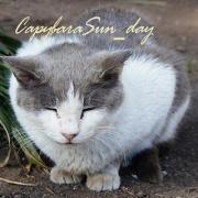 CapybaraSun_day