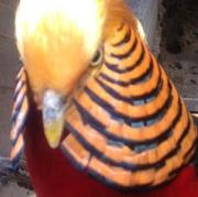 鳥が大好きな男のブログ。