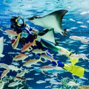 Aquariumin'