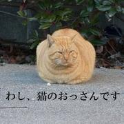 わし、猫のおっさんです