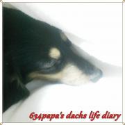 634papa's dachs life diary