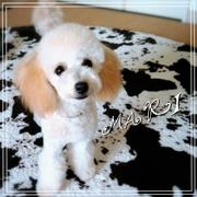 RIEPOOHと愛犬MARIのHappy Life