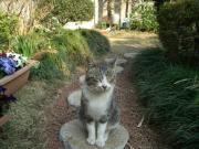 もやもやマコト猫のブログ