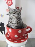 猫の雑貨屋さん「キャトラン」&猫カフェ