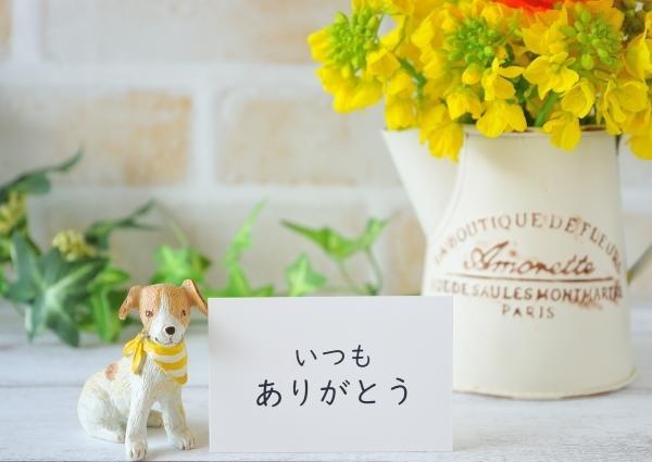 teaさんのプロフィール