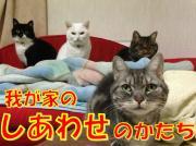 ねこといっしょ 〜4cats〜