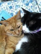 猫兄弟、それからいろいろな事。