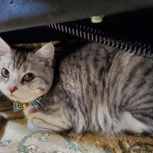 猫☆耳のブログ