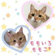 桃子*さんのプロフィール