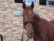 競馬データ〜軸馬予想とコース別種牡馬血統データ