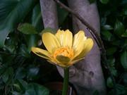 散る花もあり