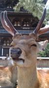 ブログ奈良県奈良市美容室 ガロピーヌ・エ・ガロパン