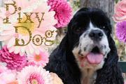 ♪pixy,DOG OnlineShopブログ♪