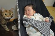 顕微授精から出産 〜子育て、たまに猫〜