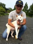白柴ハナちゃんのブログ