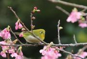 沖縄の自然と文化☆写真日記